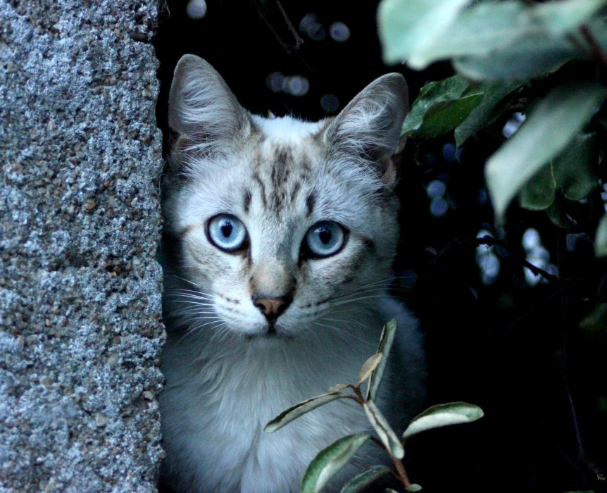 Blog de tilleul mon lapin tilleul compagnie - Mon chat me colle plus que d habitude ...