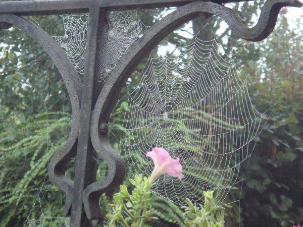 Toile d'araign�e