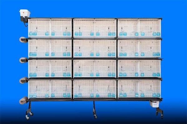 Cage de elevage de canaris tarenziane