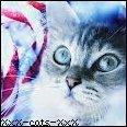 Photo de XxX-cats-XxX