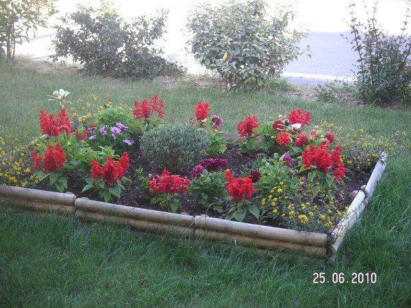 mes fleurs mon parterre devant la maison chez. Black Bedroom Furniture Sets. Home Design Ideas