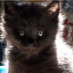 centaines disparitions de chats a angers blackfelines. Black Bedroom Furniture Sets. Home Design Ideas