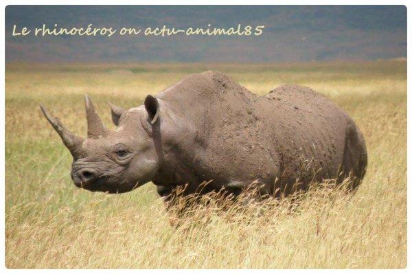 Le Rhinoc�ros Blanc