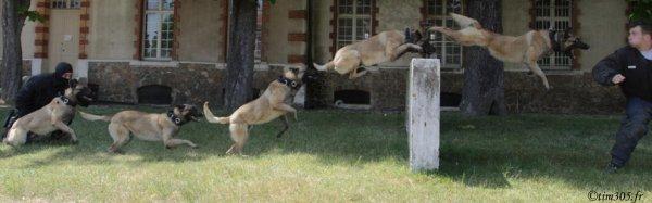 RAID maitre-chien . - Blog de Police-RAID-17