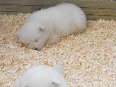 voila des nouvelles photos des bebes .ils sont craquants