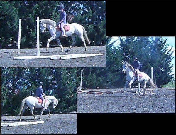 Mission trouver un cheval pour faire des balades et s'�clater dans le Tarn.
