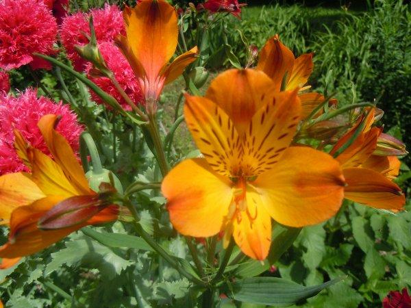 Des fleurs de mon jardin pour vous faire un peu rever for Vasques pour fleurs jardin