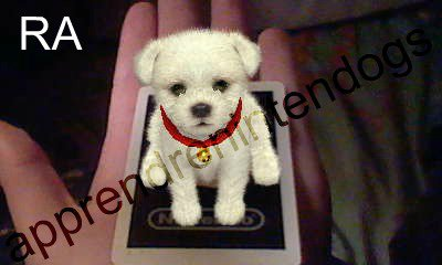 Carte Ra Nintendogs Cats