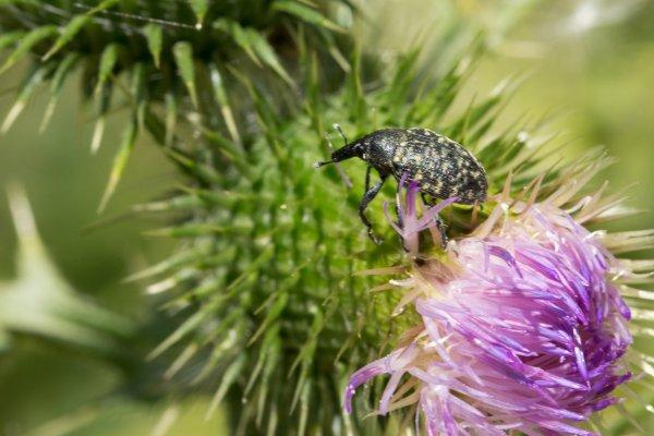 Quelques insectes  !