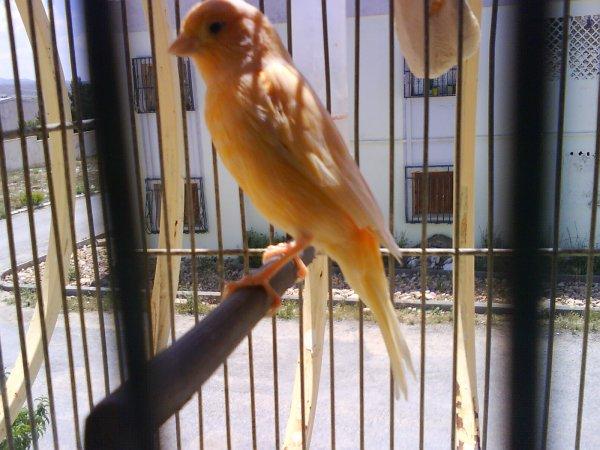 femelle 2010
