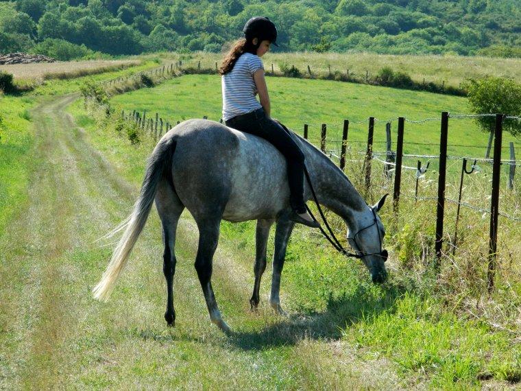 """""""J'ai cru enfant que pour aimer les chevaux il fallait les monter, et c'est au fil de longues années d'obstination équestre que j'ai compris la méprise. D'assise sur leur dos, je me suis couchée à leurs pieds."""""""