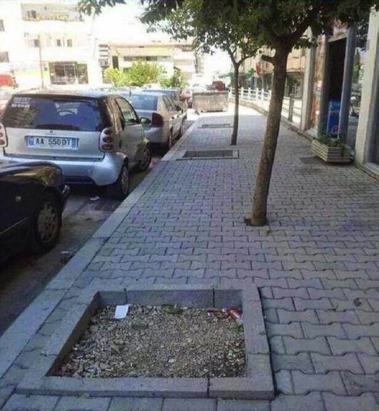 Les arbres, c'est dans les carrés, non ?