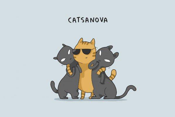 Suite des chats terribles......