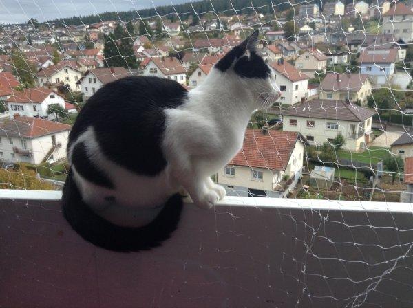 Filet de s�curit� mis, mes doudous ont vite profit� du balcon, malgr�, encore de nombreuses choses � ranger, mais cela a fait des heureux