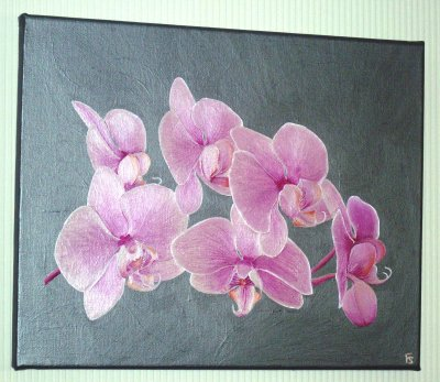 Orchidee rose