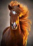 Photo de Tout-centre-equestre