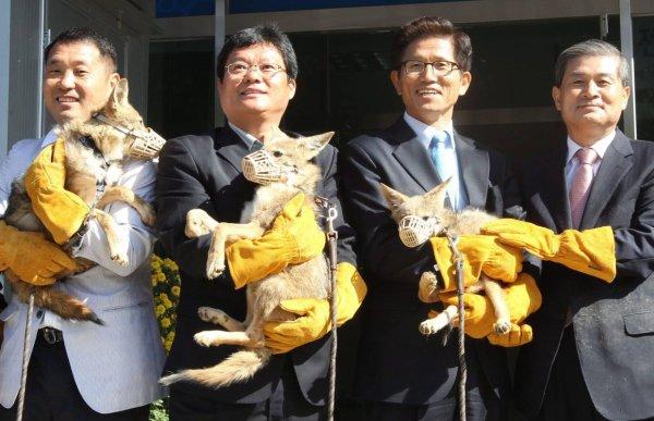 En Chine, une usine g�ante de clonage de vaches et de chiens