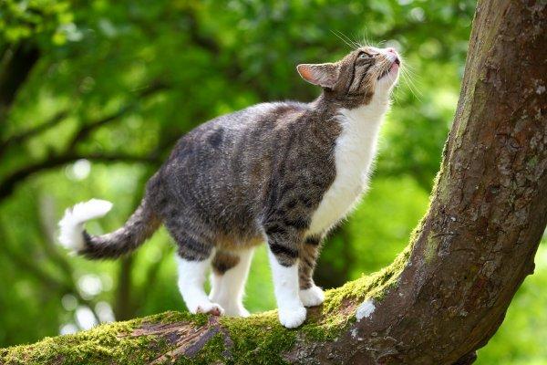 Science d�cal�e : les chats comprennent des lois physiques de base
