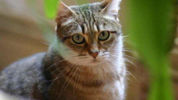 Bordeaux: la gendarmerie lance un appel � t�moins pour retrouver un chat