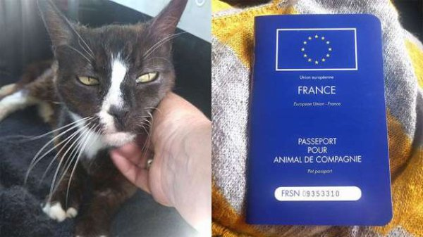 Un chat disparu � Londres r�appara�t 8 ans plus tard... � Paris