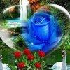 rose6221