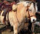 Photo de cheval-xxx