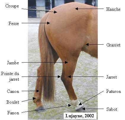 l 39 ext rieur du cheval le galop d 39 un cheval est la