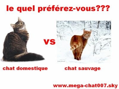 Synonyme de chat redevenu sauvage