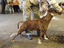 Photo de Tchade