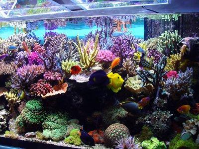 Types de bac aquarium eau de mer vie l 39 aquariophilie d for Bac a poisson 500l