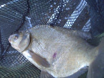 une pêche au pôle feeder a Draveil