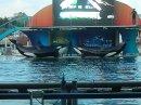 Photo de orcamaniac