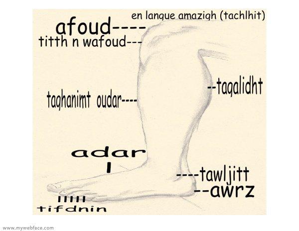 pied : adhar