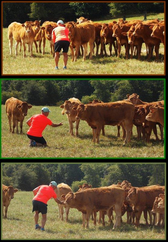 Vacances 2016 : le Limousin : Du 8 Aout !