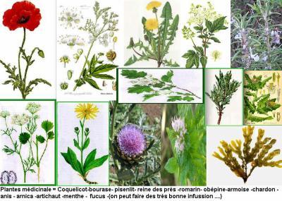 Pour rester ZEN (plantes Médicinale) - mon jardin secret