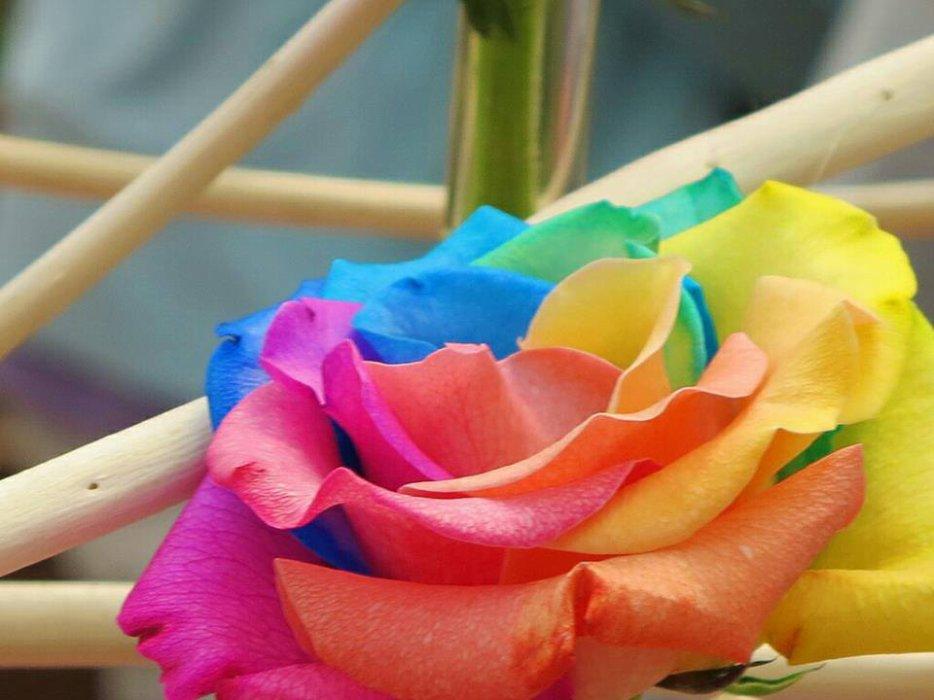 tout est multicolore - Page 4 3183287603_2_6_Tni4oGM9