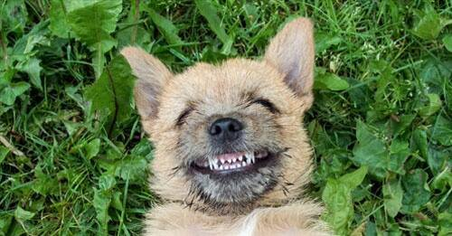 Chien qui sourit: signification - Page 2 3213719829_1_2_quPMQggW