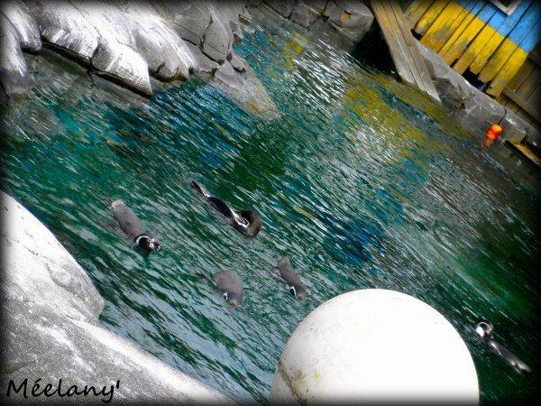 ..ılıllı..  Un R�ve Devenu R�alit� ; Nag�e Avec Les Pingouins ..ılıllı..