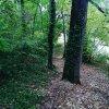 Promenade dans les bois de Mons�gur dans le Lot et Garonne