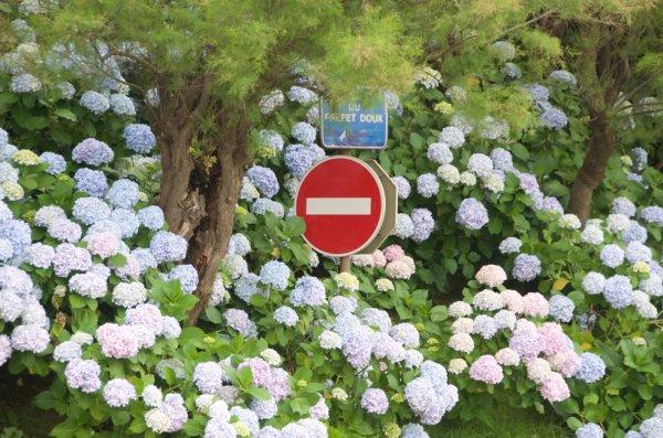 Le sens des fleurs uniques