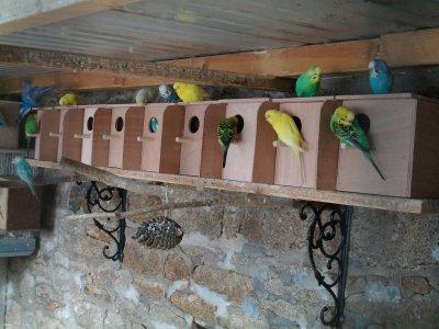 Voilà mes nids ont été posée pour la saison 2011