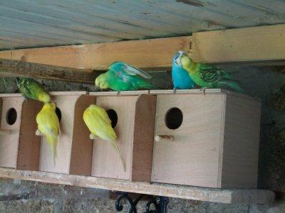 Voil� mes nids ont �t� pos�e pour la saison 2011