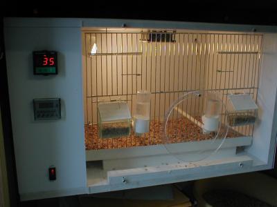 cage chauffante elevage de canaris. Black Bedroom Furniture Sets. Home Design Ideas