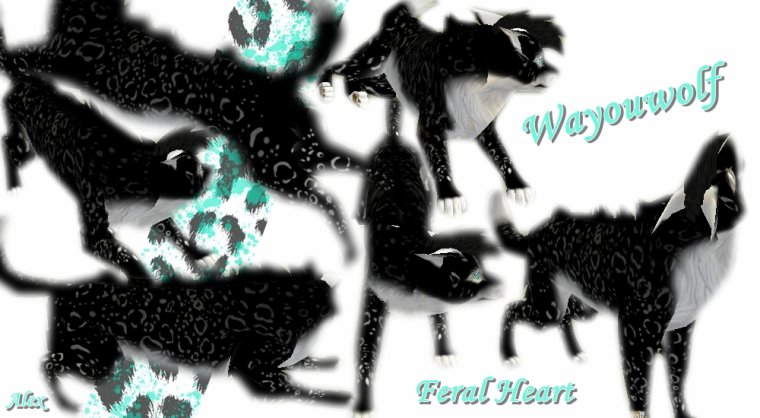 Feral Heart // Mes perso :p