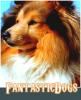 FantasticDogs