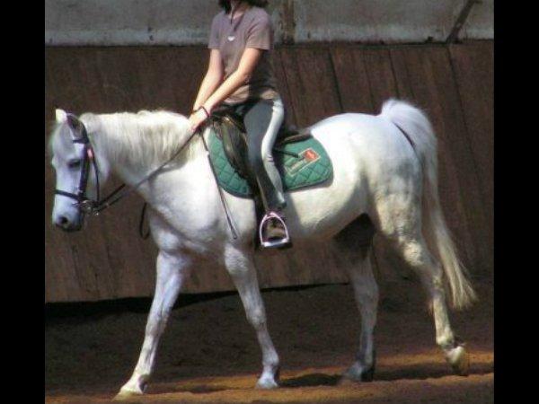 2�me chronique : Emma, passionn�e d'equitation