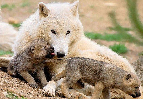 Diaporama de sophie-loup
