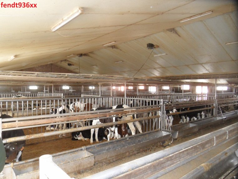 Visite d'une ferme de 1000 vaches