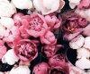 BeautyBlog35