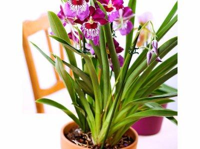 diff rentes vari t s d 39 orchid es tout savoir sur les fleurs. Black Bedroom Furniture Sets. Home Design Ideas